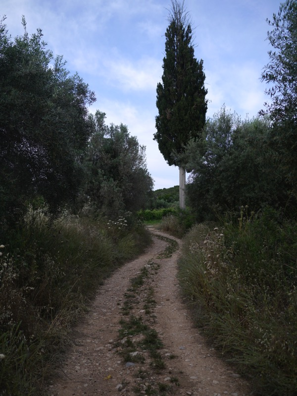 P1100094